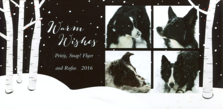 Petey, Flyer, Rufus, and Snap! holiday card