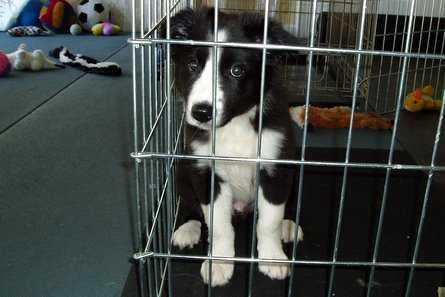 Puppy in his crate looking curious